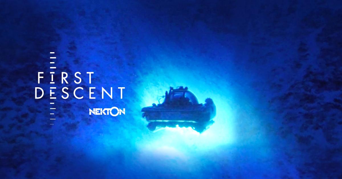 Nekton | Homepage